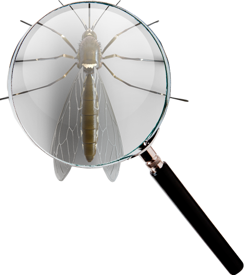 mosquito find